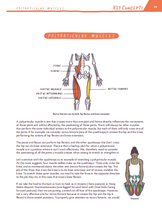 polyarticular muscle yoga pose