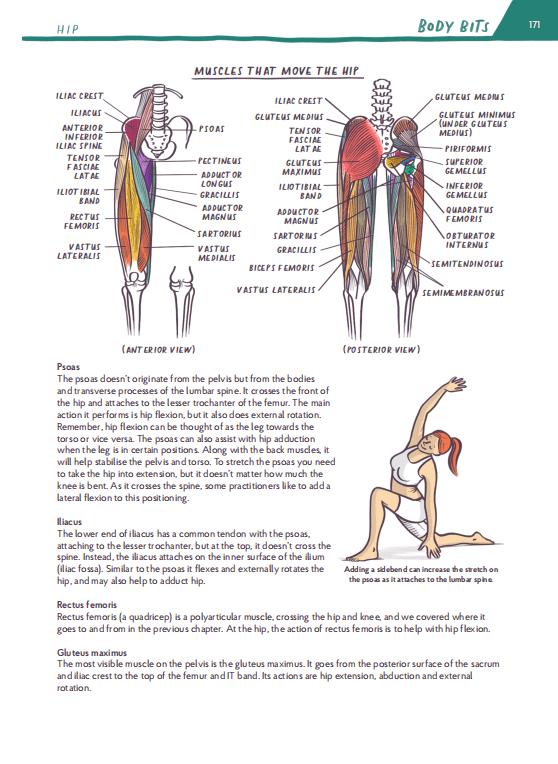 hip external rotation muscles